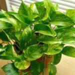 این ۵ گیاه تصفیه کننده هوا را حتما برای سلامتی در منزلتان پرورش دهید!