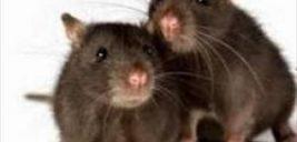 موش ها به درون دستگاه خودپرداز حمله کردند