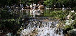 باغ پرندگان تهران با محیطی زیبا و منحصربهفرد و یک روز رویایی با پرندگان زیبا