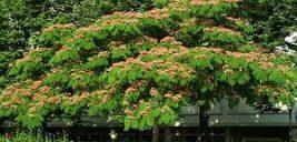 اصول کاشت و پرورش درخت ابریشم