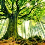 """شعر خواندنی """" درختانی را از خواب بیرون می آورم """""""