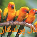 فال پرندگان