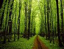 چه درختی هستید؟ «شخصیت شناسی»