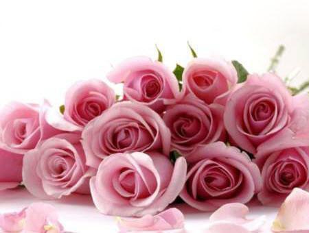 فال گلها بسیار جالب و دوست داشتنی ، معانی رنگ تعداد شاخه های گلها