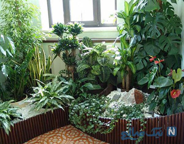 استفاده از گل های سبز در خانه