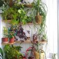 دیزاین های بسیار زیبا از چیدمان گل و گیاه در آپارتمان + تصاویر