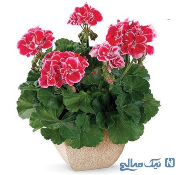 گلدان برای اپارتمان