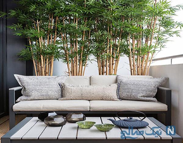 تزئین اتاق با گیاه بامبو
