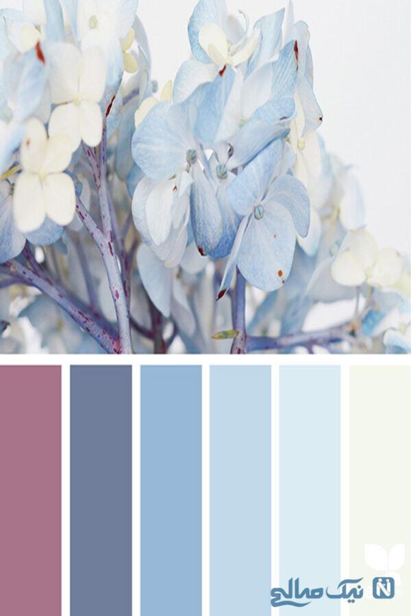 رنگ های طبیعت