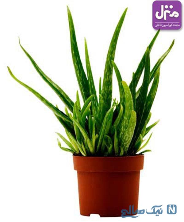 گیاهان آپارتمانی در دکوراسیون منزل