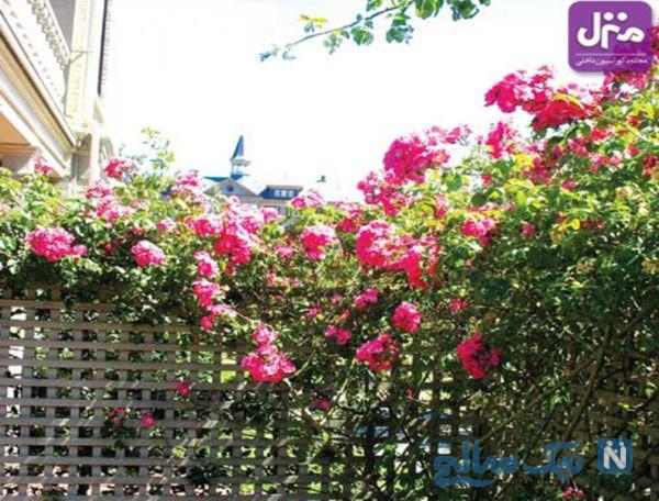 گلهای رونده