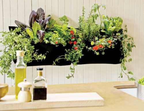 گلخانه ای برای دکوراسیون آشپزخانه