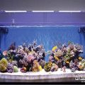 یک گوشه دنج در خانه با آکواریومی پر از ماهی های رنگارنگ! +تصاویر