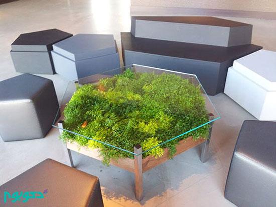 مبلمانی که گیاه بر روی خود دارد +تصاویر