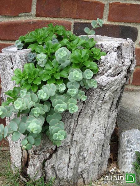 با تزیین باغچه، روح تان را باغبانی کنید +تصاویر