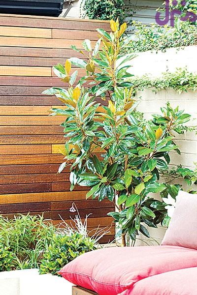 برای محدود کردن دید همسایه در تراس گیاه بکارید +تصاویر