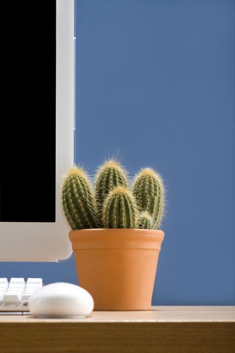 گیاهان با دوام و زیبا که رسیدگی کمی میخواهندمخصوص محل کار +تصاویر