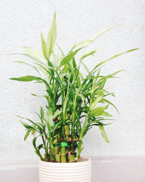 گیاهان با دوام و زیبا که رسیدگی کمی میخواهندمخصوص محل کار تصاویر