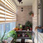 گیاهان آپارتمانی خانهای سبز در تهران! +تصاویر