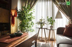 دکوراسیون چوبی و سرسبز