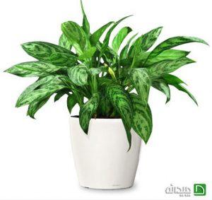 دکوراسیون پاسیو با گیاهان آپارتمانی