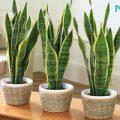 معجزه گیاهان آپارتمانی برای بهبود سلامتی