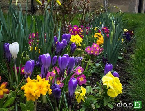 آماده کردن باغچه برای بهار