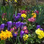 باغچه منزل خود را بهاری کنید!