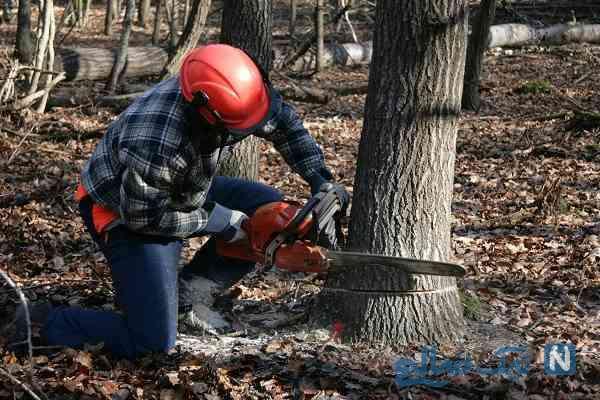 نظر مراجع درباره قطع درختان خاص