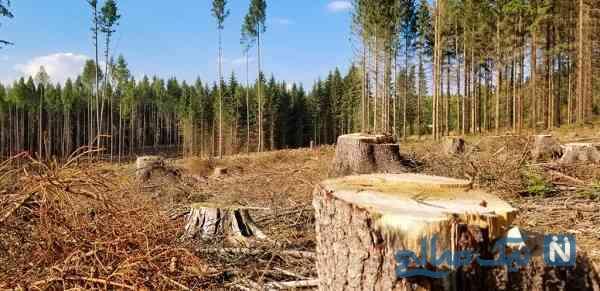 نظر مراجع درباره قطع درختان
