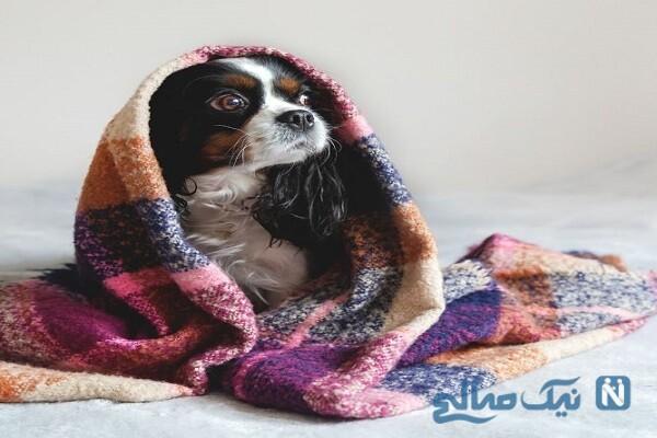 حکم چسبیدن موی سگ بر روی لباس