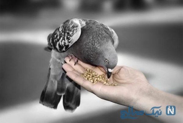 گندمهای دعا خوانده