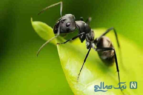 نظر اسلام درباره کشتن مورچه و مگس چیست؟