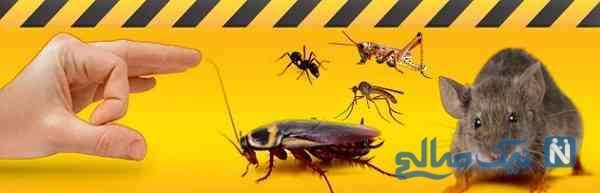 کشتن مورچه در اسلام