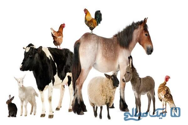 سه حیوانی که پیامبر(ص) توصیه به نگهداری آنها کرد