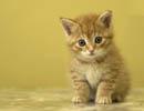 حکم نگهداری گربه در خانه !