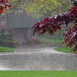 استجابت دعا در هنگام باران ، چرا به دعا در زمان بارندگی توضیه شده است؟