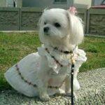 حکم شرعی نگهداری سگ های خانگی