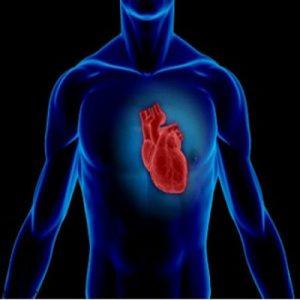 شگفتانگیزترین عضو بدن انسان کدام است؟