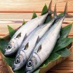 نرخ جدید انواع ماهی در بازار اعلام شد ،افزایش قیمت قزلآلا