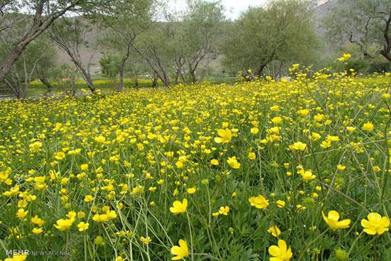 گشت و گذار بهاری در دریاچه زیبای گهر!+تصاویر