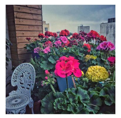 از تیپ هستی مهدوی فر تا گلهایی زیبا در اینستاگرام وی+تصاویر
