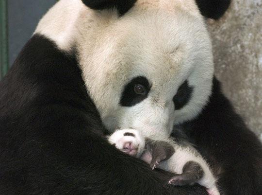 مادرانه های زیبا!+ تصاویر