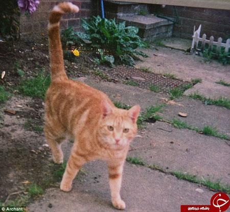 پیرترین گربه جهان را ببنید!+تصاویر