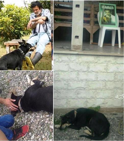 وضعیت سگ حبیب پس از درگذشت وی!+عکس
