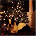 درخت کریسمس ستاره ها چه شکلیه؟ +تصاویر