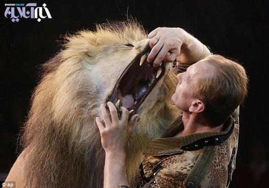 رقص مرگ با شیر !+تصاویر