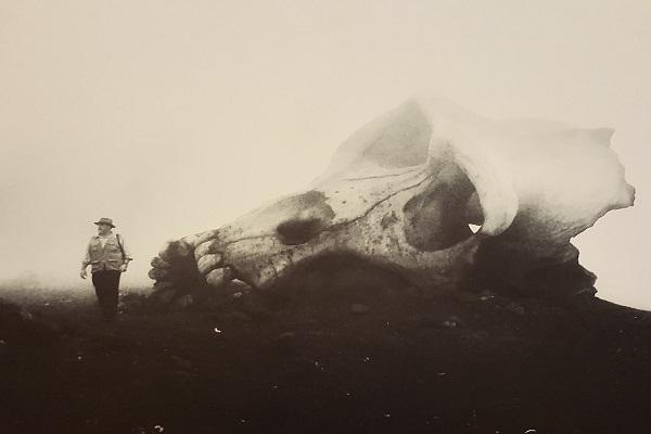 فیلم سینمایی جزیره جمجمه