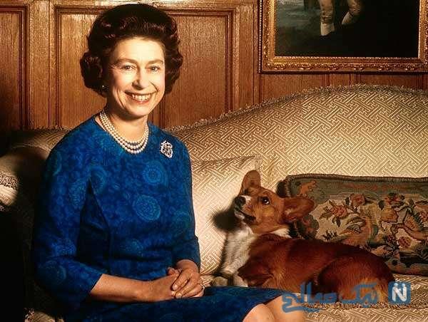سگ های ملکه
