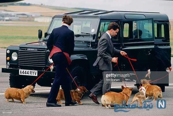 سگ های کورگی ملکه